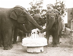 elephant-birthday
